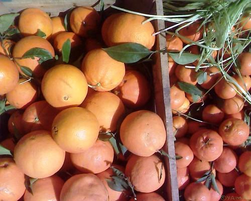 Berkane Oranges