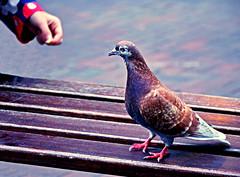 Do NOT Feed the Pigeons! (Martin David Photography) Tags: david photoshop nikon shropshire shrewsbury adobe elements nikon photography martin d7000 pse9 d7000