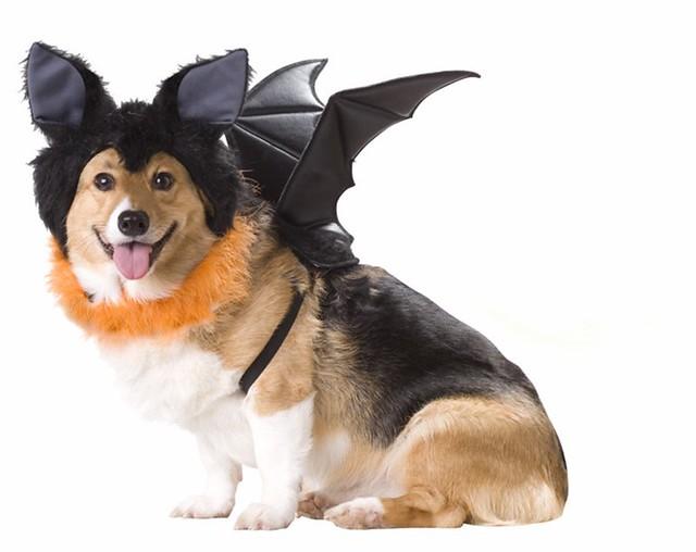 dog-wear perfectdogsuppliesonlinecom3 by DogSuppliesOnline
