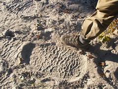 Okavango Elephant Foot Print