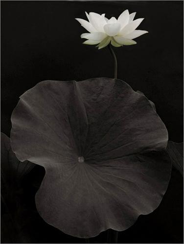 Black-&-White