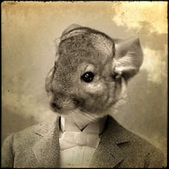 Bobby (Martine Roch) Tags: pet cute love animal sepia square dream surreal chinchilla fantasy photomontage manray petitechose martineroch