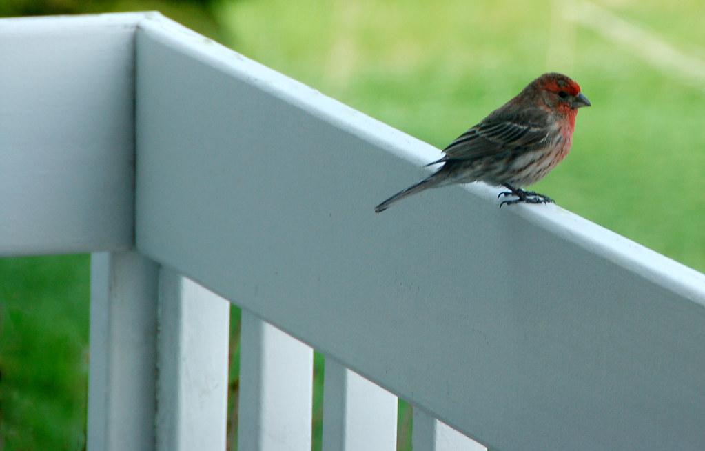 Not a sparrow