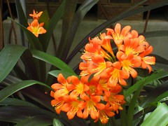 AWITP_June7_08_35.jpg (Adrian J.K. Shum, CGD) Tags: nature winnipeg florafauna muhsashumblogspotcom