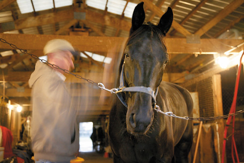 harness dickey & pierce. Donald Harness|Horse Stable Horse Stable