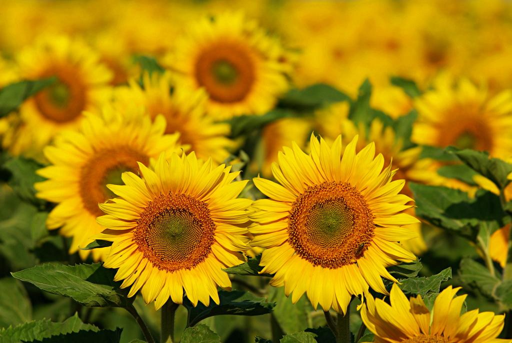 Весенние цветы название и фото: fotozvetov.ru/razdeli/nazvaniya/vesennie-tsveti-nazvanie-i-foto.html
