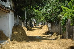 Hay drying streets