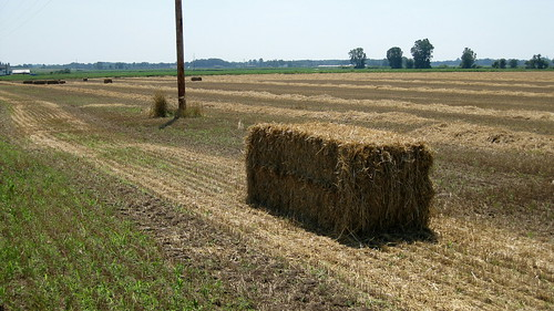 Michigan- Straw Bale