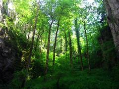 Rakov Skočjan (roelfina) Tags: vakantie 2008 slovenië rakovskocjan