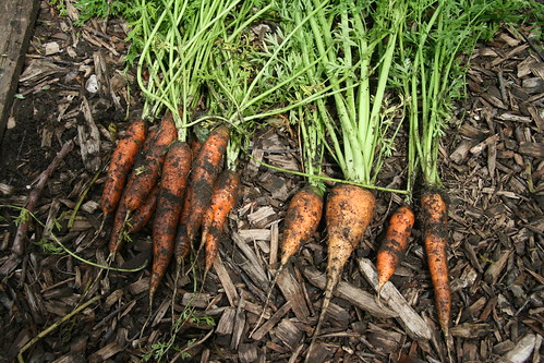 three types of carrots