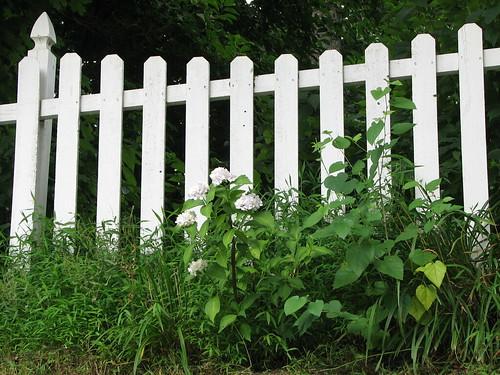 Steph's Fence