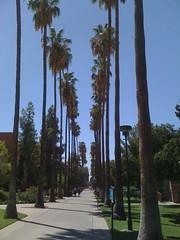 avenue of palms (alist) Tags: campus move alist asu robison alicerobison ajrobison