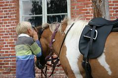 Hestehviskeren (fotomormor) Tags: sal henrik sokna rideskole photofaceoffwinner pfogold horswhispering hestehvisker