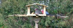 First galahs in M's birdfeeder!