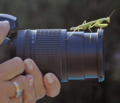 The Photo Assistant (Jeff Clow) Tags: macro nature animals closeup mantis insect photography photographer explore dfw unusual prayingmantis encounter naturesfinest mywinners theperfectphotographer jeffrclow