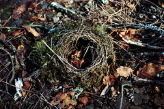 the bird's nest (pedra silvo !) Tags: leaves birds stadium birth egg beijing utata serpents olimpic