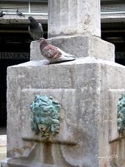 Palomas en la fuente