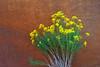 Flowers at Devil's Garden (hades.himself) Tags: usa flower yellow utah eua luis nikkor hades escalante devilsgarden grandstaircaseescalantenationalmonument d700 balbinot