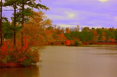Frenchman's Creek (T i s d a l e) Tags: november autumn orange lake fall overcast easternnorthcarolina frenchmanscreek nikond40 tisdale53