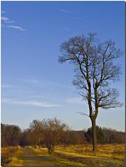 My Oak Tree I (dolorix) Tags: tree germany landscape oak heath landschaft baum heide eiche wahnerheide theunforgettablepictures