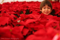 red rover (dorsalfin) Tags: red arizona portrait flower phoenix leaves poinsettia son phoenixarizona dorsalfin top20red theunforgettablepictures goldstaraward