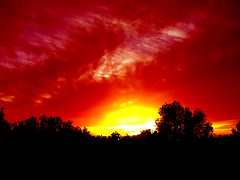 It's time to go home (Mouin.M) Tags: sunset sky nature yellow branches air thorns abigfave