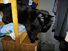 Cat on the closet shelf
