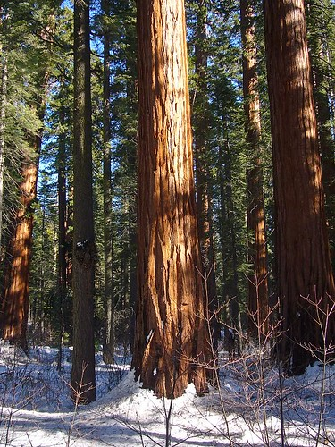 Sequoia Grove by you.