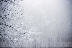 Fog (mazsola) Tags: winter snow beauty photoshop canon landscape photography eos photo hungary usm retouch 70200 f4 hungarian digitalretouch mazsi 40d mazsola doramakszy makszydra