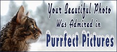 Purrfect Pictures Comment Code 200901