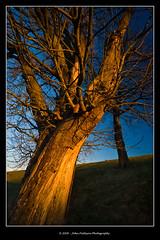 Sunlight Warm (jpatt1954) Tags: uk trees december cumbria pro 2008 cpl s5 sigma1020mm warmcolours lateafternoonsunlight nrsedgwick