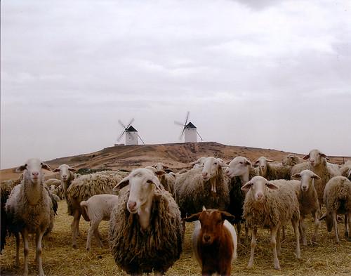 La Mancha: ovejas y molinos.