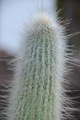 botanico 120 (blum1) Tags: cactus botanico ortobotanico