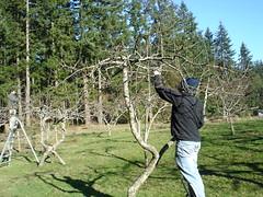 Spring pruning begins