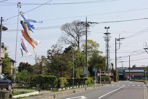 鴨田下居田の火の見櫓:鯉のぼり