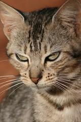 IMG_3876 (Max Hendel) Tags: cat feline gato felino the streetcat frind smallfarm felie bichano animaldeestimação beautifulcat animaldoméstico canoneosdigital photobymaxhendel bymaxhendel photographedformaxhendel fotografadopormaxhendel arealvaspbrazil maxhendel photographedbymaxhendel pormaxhendel canoneosphoto photographermaxhendel maxhendelphotography duartesmallfarm