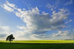 seul (pierre hanquin) Tags: light sky color tree nature colors landscape geotagged nikon europa europe belgium belgique pierre getty paysage landschaft arbre lepetitprince lige wallonie 1685 naturepoetry hannut d7000 1685mmf3556gvr imagesforthelittleprince hanquin