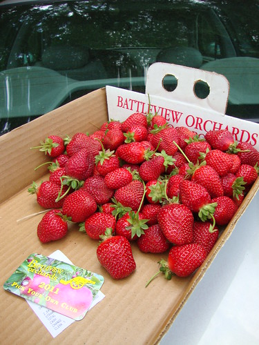 Pick-Your-Own Strawberries 2011