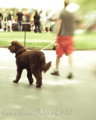 Madison Square Park (Carmen Moreno Photography) Tags: madisonsquaregarden nyc urbanism lensbaby canoneos7d day1 da1 dia1