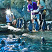 Penguin Feeding @ Calgary Zoo (Explore # 41 March 6th 2014)