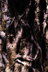 8 Tree bark