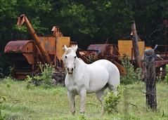 Old School farming equipment (hz536n/George Thomas) Tags: summer horse orange white green oklahoma rust stillwater 2008 cs3 canon30d canonef70200mmf4lusm