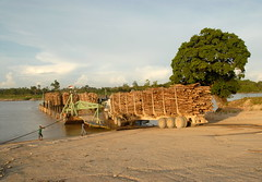 LOGGING IN SUMATRA (Claude  BARUTEL) Tags: wood mill ferry truck river paper sumatra indonesia crossing logging barge rapp