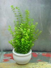 Thủy Sinh Tuấn Anh-Chuyên cây & Rêu Thủy Sinh, Cá Cảnh Biền & Hồ Cá Cảnh Biển - 10