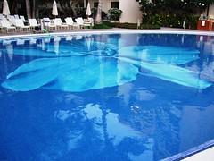 The Halekulani Pool