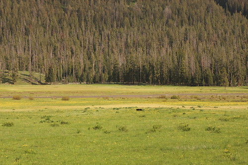 Montana June 208 103