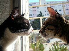 Sweet Kiss (Kitty & Kal-El) Tags: pet cats cute animal closeup cat feline kiss close sweet sony kitty gatos gato gata felino felina kalel h7 sonyh7