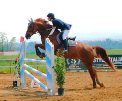 In gara - In race (haldlov) Tags: horses horse caballo cheval cavalli cavallo equitazione
