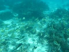Torquoise Bay, Australia (C) 2008