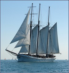 cruising a tall ship (ana_lee_smith) Tags: empiresandy tallship authentic schooner sailboat threemastedternschooner builtuk1943 steel sailing sail mast hull bow passengers hopenobodysseasick crew berthedatharbourfront torontoharbour lakeontario toronto lake water sky horizon blue black flag skullcrossbones pirateflag piracy pirate piracyonthehighseas 17th18thcentury knightstemplar sonyh2 analeesmith iwishihadsonicenailsasyouhavemhandsarelikeaworkershands ultimateshots ultimateshot